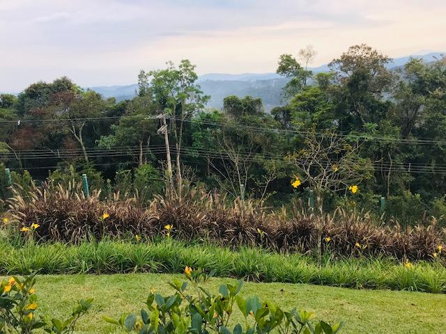 Área con proyecto de paisajismo terminado